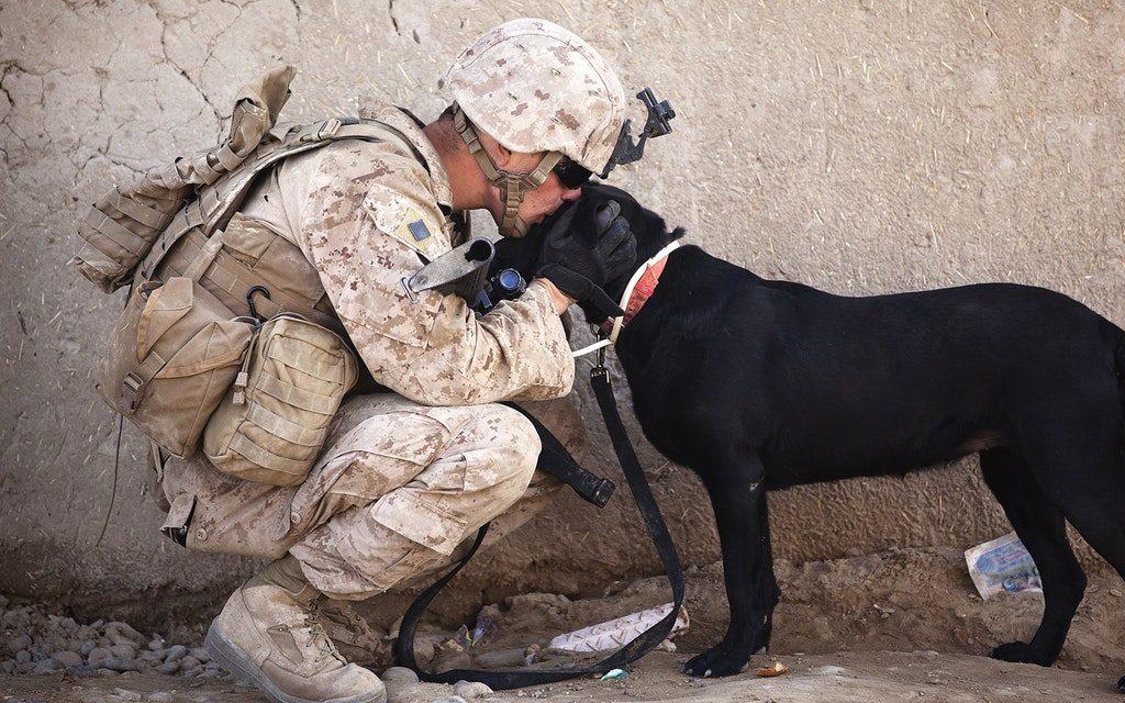 PTSD – Hunden kan gøre stor forskel på hverdagen for en person med PTSD