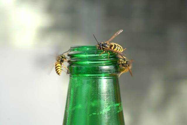 Når du skal bekæmpe hvepse