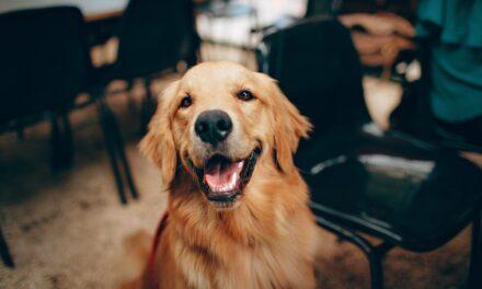 Derfor er hunden mandens bedste ven